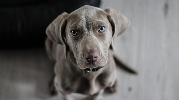 Нагръдници За Кучета: Какви Видове Има?